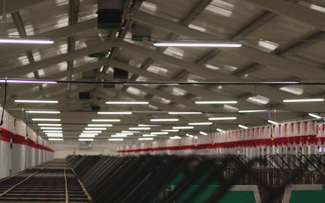 Instalación eléctrica BT en granja porcina